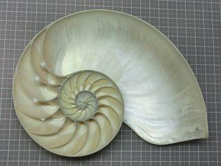 Fossilreplica09
