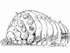 Fossilreplica18