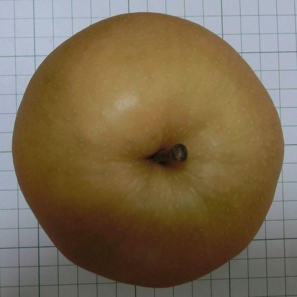 a Pear - Niitaka