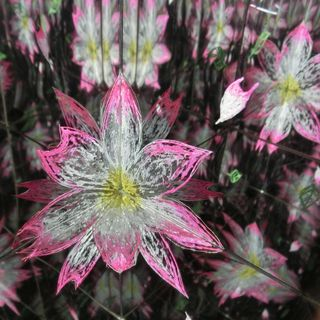 LabirynthBox Flower1