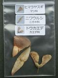 Flying seeds sample