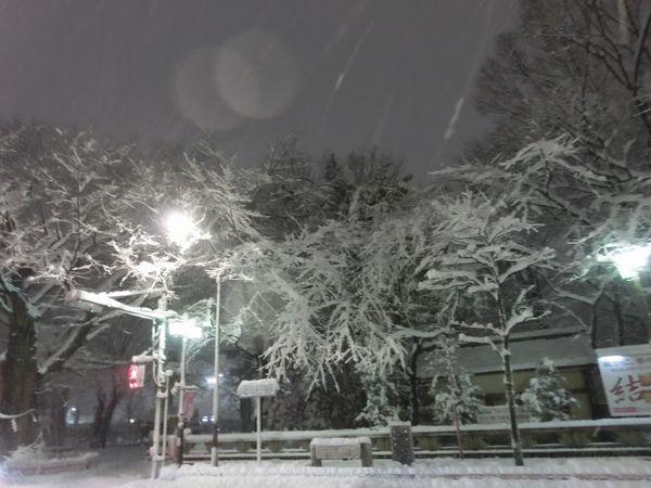 Snow20140214a