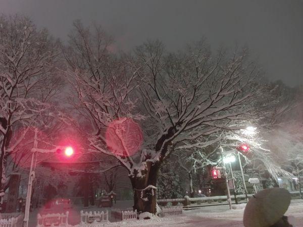 Snow20140214b
