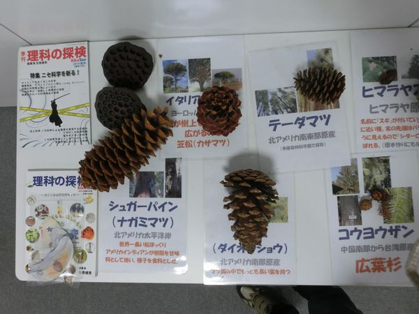 nuts specimen B