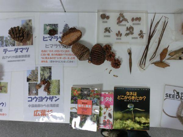nuts specimen C