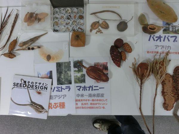 nuts specimen D