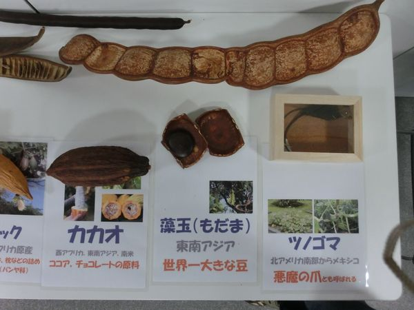 nuts specimen F