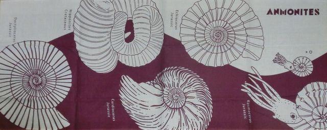 Ammonites_tenugui