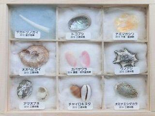 Shellspecimen2