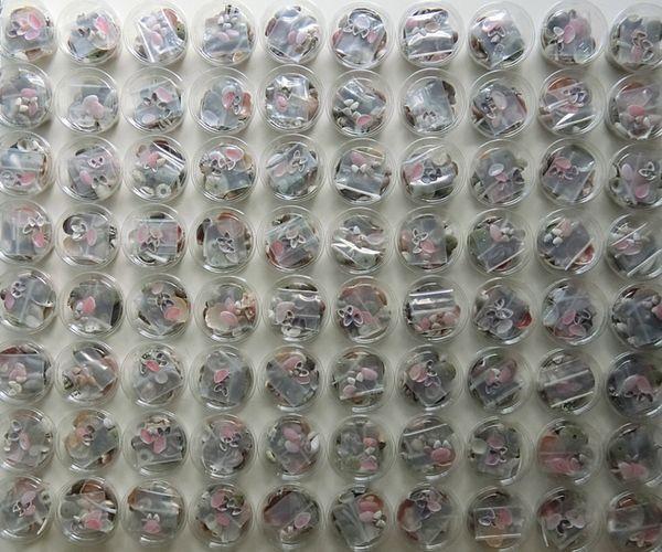 Shells80