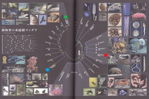 Phylogenetictree04