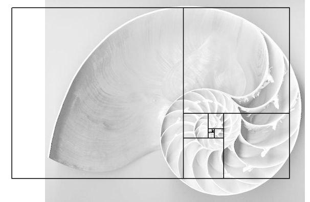 Chambered Nautilus & Golden Ratio