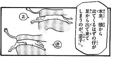 Silverspoon2sakago2