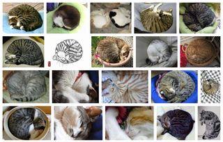 Ammonite Cat