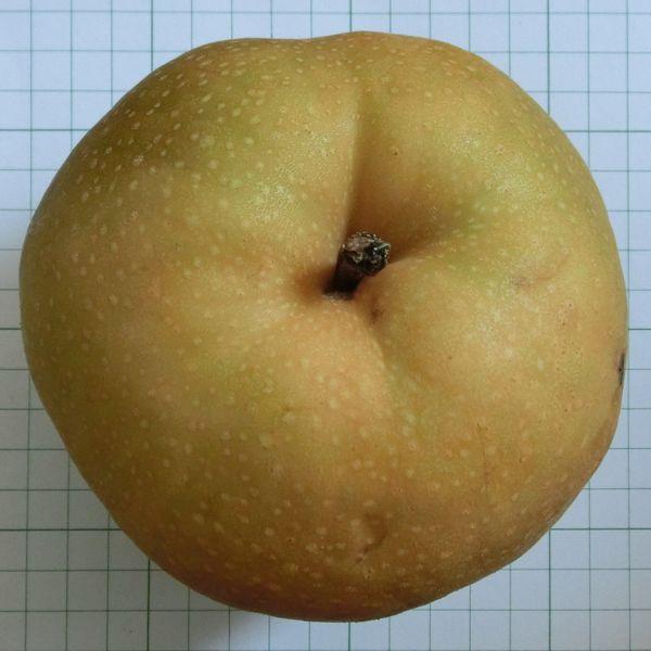 Inagi pear