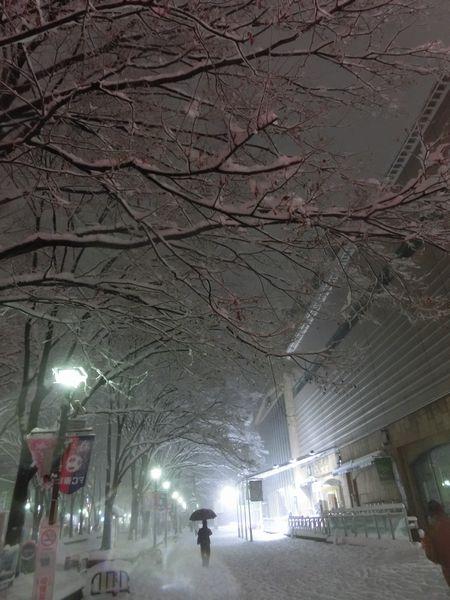 Snow20140214c