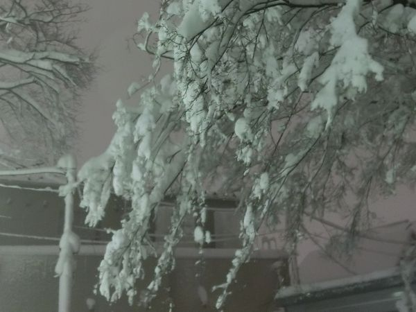 Snow20140214e