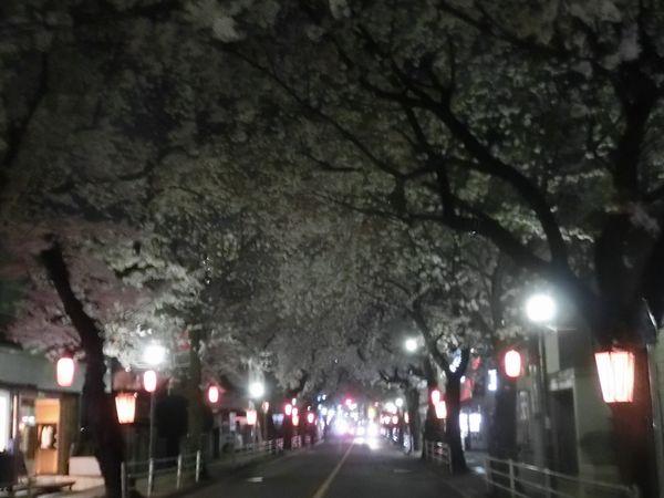 Sakura150331a