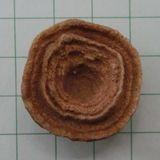 Stromatolite04