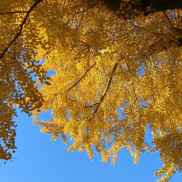 Fuchufumonjiicho201223e