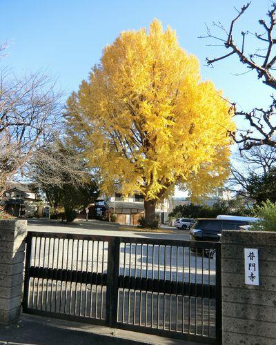 Fuchufumonjiicho201223f