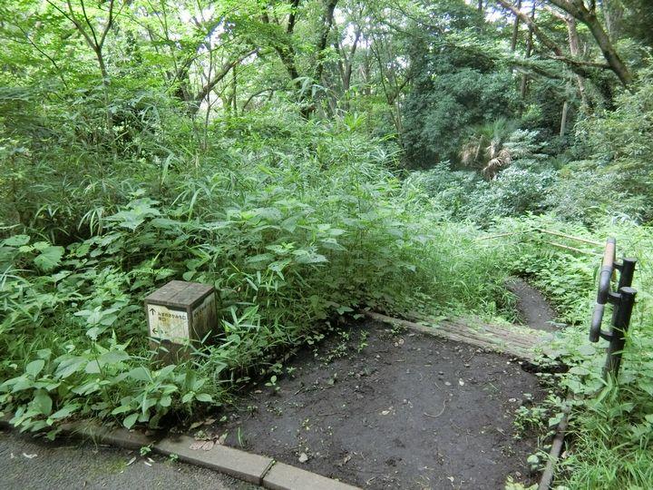 Jingashitak45