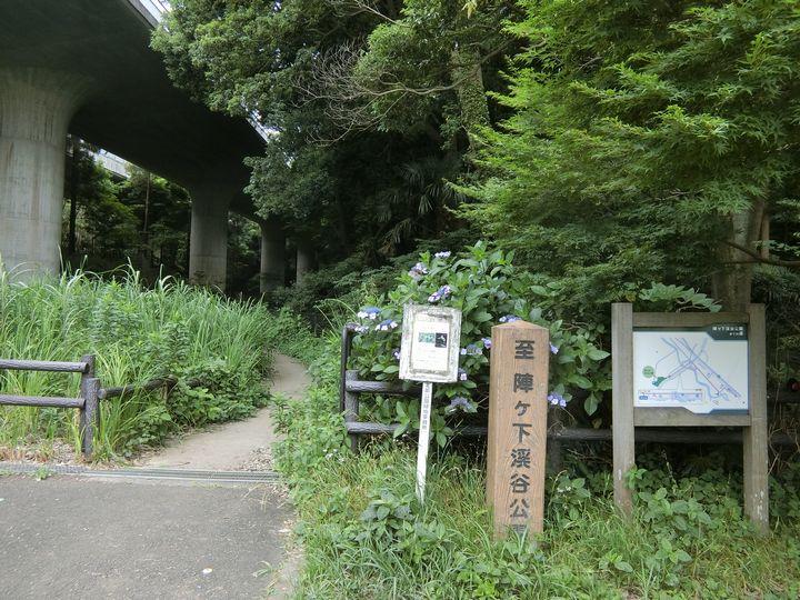 Jingashitak62
