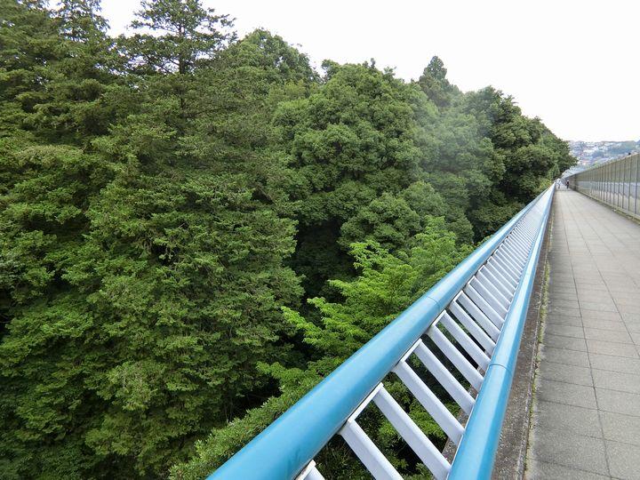 Jingashitak71