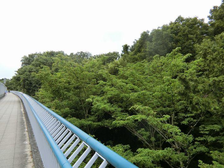 Jingashitak75