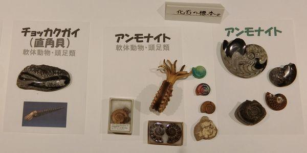 Yamato2020ammonite01